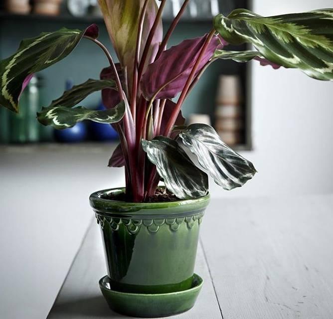 Bilde av grøn glasert 25 cm